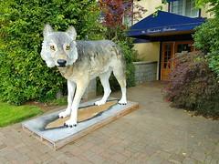 The Giant Wolf sculpture (walneylad) Tags: giantwolf winchestergalleries oakbay britishcolumbia canada art sculpture wildlife wolf victoria