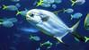 001102-P2188427 (aussiephil1960) Tags: em12 em1markii sydneyaquarium fish olympuszd1260mmf2840