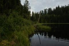 Wild black lake (Jurek.P) Tags: lake mazury masuria wildnature wildlake poland polska jurekp sonya500 water forest