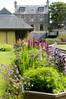 DSC_6966 (artsynancy) Tags: shetlandislandsuklerwick shetlandislands uk lerwick flowers