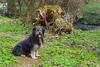 Zuzia - Prądnika Guardian (Hejma (+/- 5400 faves and 1,7 milion views)) Tags: river water color tree wood grass dog pon whiteblack red landscape
