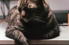Leica af-c1 2013 29
