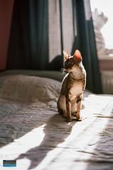 Cats on film (valentino.pt) Tags: analog cats film leica m7 summicron portra kodak photography develop ukraine 50mm