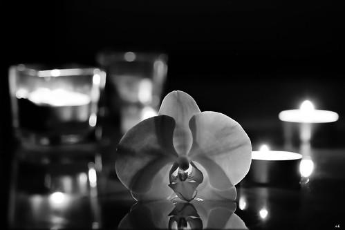 orchidée en clair obscur