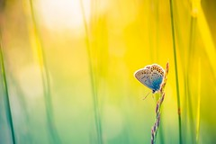 Light of Glory (icemanphotos) Tags: butterfly twilight meadow solitude zen relax dusk