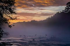 Early Arrivals (axi11a) Tags: morningroutine atl atlanta jonesbridge localparks parks geese fog