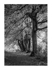 Bodmin Cemetery (Mark Curnow Photography) Tags: cemetary bodmin blackandwhite high contrast cornwall canonphotography outdoorphotography landscape greyscale highcontrast bright trees flora canon eos 7d light nature