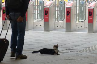 Kat in station Leeuwarden