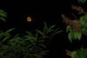 U3Z_0080 (☆♺☆) Tags: u3z uzzz u3zgrandreporter moon lune lilas