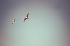 Motion (OliverJohnFernandez) Tags: film 35mm 35mmfilm kodak colorplus200 seagulls brighton blue gulls sea beach summer hot sun grain filmcommunity filmisnotdead shootfilm pentax espio 928