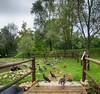 IMG_6294 Let's have a walk (pinktigger) Tags: oasideiquadris fagagna feagne friuli italy italia nature birds geese ducks ibis bridge walk