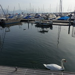 Port d'Ouchy @ Walk along Lac Léman @ Lausanne thumbnail