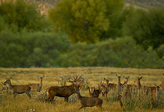 Red Stag Hunt Argentina - Patagonia 22