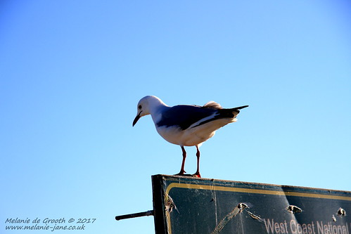 Seagull on the Sign