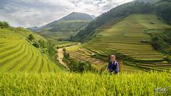 _HA89670_169_25 (Ngô Huy Hòa (hachi8)) Tags: mùcăngchải yênbái ruộngbậcthang