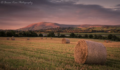Looking Towards Criffel (.Brian Kerr Photography.) Tags: scotland sony scottishlandscapes scottish scotspirit scottishborders visitscotland visitbritain light a7rii availablelight outdoor outdoorphotography opoty nature naturallandscape natural criffel summer autumn briankerrphotography briankerrphoto beautifulmorning scottishlandscape grass field mountain