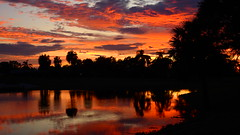 Sunset after Irma (Jim Mullhaupt) Tags: hurricaneirma hurricane irma sunset sundown dusk sun evening endofday sky clouds color red gold orange pink yellow blue tree palm outdoor silhouette weather tropical exotic wallpaper landscape nikon coolpix p900 bradenton florida manateecounty jimmullhaupt cloudsstormssunsetssunrises storm thunder wind rain weatherphotography