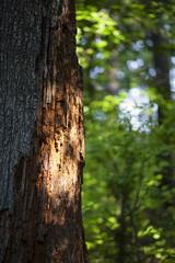(Satirenoir) Tags: virginia summer masonneckstatepark masonneck park forest hike hiking
