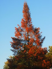 Fall is near... (Kens images) Tags: fall change season autumn trees nature rainbow majestic canon ontario colour red