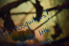 Nobody Likes Mosquitoes! (MTSOfan) Tags: window message handwriting bats education epz