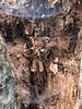 Webs in trees (Pink Knitter) Tags: walk cutlerpark webs bark tree