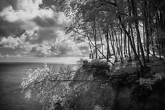 Jasmund (hansekiki ) Tags: rügen jasmund nationalpark ostsee balticsea landschaften infrared infrarot canon5d wald baum bäume trees