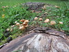 Mushrooms (wallygrom) Tags: england westsussex angmering ferring worthing a259 highdown highdowngardens