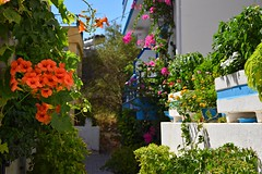 summer moods (JoannaRB2009) Tags: summer mood paleochora crete kriti kreta greece greek island flowers building architecture sun sunny light shadow nature flowerpots street hotel hot town