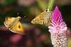Deep Cut Gardens_617 (samramahmoud) Tags: insect outdoor sonnart18135 zeiss sony