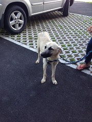 Foto 5 (citydogs4streetdogs) Tags: tansy