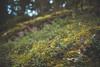 Lingonberries (~ Maria ~) Tags: tyresta forest autumn nature nationalpark sweden september 2017 mariakallinphotography nikond800 nikon2470mm lingon lingonberry wildberries