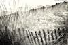 La barrière de sable (photos.osmose) Tags: sable mer mouvement monochrome borddemer ambiance zénitude zonehumide eau évasion extérieur regard rêverie reflets repos insolite imaginaire ombrelumièreinsolitetempssoleil ombragé océan ombre paysage portrait plage aquatique solitude littoral expression exposition composition calme vue vision ballade noirblanc noiretblanc