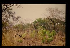 Outlook Of Tropical Woodland = 熱帯乾燥疎林の景観