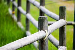 Corner -- HFF (Jessie T* -- still catching up) Tags: fence symmetry corner fencedfriday weatheredwood