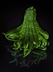 Buddha's hand (Angelo Petrozza) Tags: citrusmedicavarsarcodactylis buddha hand mano budda citurs cedro stilllife light fingered citron pentaxk70 angelopetrozza