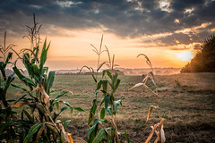 Misty vieuw of Borgloon (Stillhappy.) Tags: borgloon mais maiz sun mist misty field haspengouw limburg belgium