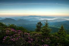 Moonset (Matt Williams Gallery) Tags: mattwilliamsphotography nikon d500 landscape landscapephotography nature naturephotography northcarolinaphotographer northcarolina northcarolinamountains roanhighlands roanmountain grassyridge rhododendron bloom mountains moon valley green lush sky ridges clouds fineartphotography fineart forest hiking appalachiantrail