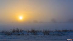 Winter Fog (Classicpixel (Eric Galton) Photography Portfolio) Tags: hiver winter mist brouillard fog gel gelée frost ice sun sunrise leverdesoleil country campagne landscape paysage pluie brume brumeux ottawa ontario canada ericgalton classicpxiel sony nex6