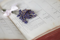 Happy Weekend ! (eleni m (busy remodeling house)) Tags: happyweekend old vintage indoor dof lavender dried book ribbon pages flowers stilllife