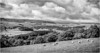 Upper Teesdale . (wayman2011) Tags: canon50d lightroom wayman2011 bwlandscapes mono rural countryside trees sheep pennines dales teesdale countydurham uk