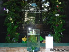 Royal Paradise Hotel Phuket Patong Thailand (31) (Eric Lon) Tags: dubai1092017 thailand phuket patong hotel spa tourism city ericlon