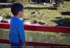 (IT Producciones Audiovisuales) Tags: jardinjapones itproduccionesaudiovisuales macro flor flower agua water abeja bee kid boy people colors colour colores color puente bridge