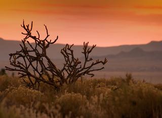 Sunrise with Cholla Cactus