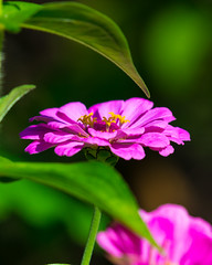 09162017-1-2 (bjf41) Tags: flower plant leaves nikon nikond600 nikon200500