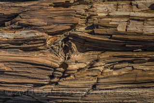 Close-up of Petrified Log in the Bisti Badlands