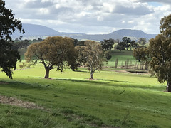 View tpwards Barwite (Denis Fox) Tags: red gums grass green sky winter