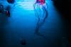 IMG_3709 (nas_chudo) Tags: acquariodigenova sealife seaworld sea ocean jelly jellyfish meduse water underwater underthesea