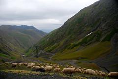 Patches of snow left, hundreds of sheep, just  after passing the 2900+ meter Abano Pass (Jelger Groeneveld) Tags: georgia tusheti omalo dartlo kakheti roadtrip caucasus
