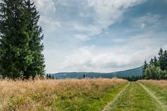 road to... (MichalKondrat) Tags: drzewa sierpień polska 2017 natura kotlinakłodzka przyroda masywśnieżnika niebo pejzaż sudety zieleń dolnośląskie góry chmury krajobraz