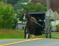 Enjoying the ride (afagen) Tags: pennsylvania lancastercounty amishcountry groffdaleconferencemennonitechurch wengermennonite oldordermennonite mennonite horseandbuggy buggy
